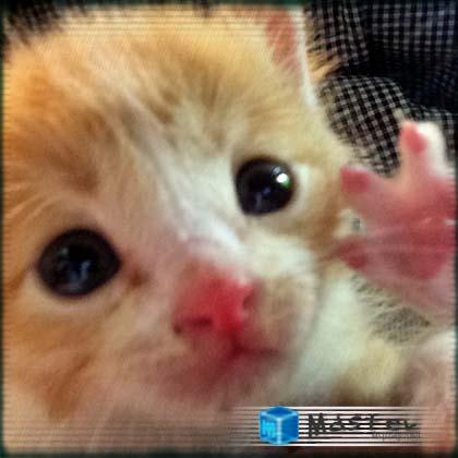 Hello 仔猫