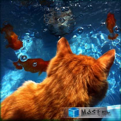 仔猫と金魚 らんちゅう