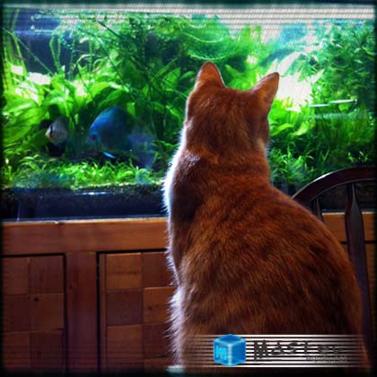 Cat and Aquarium