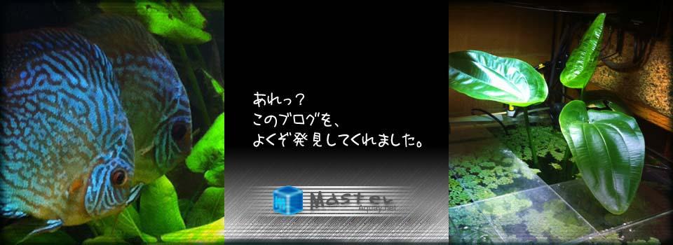 アクアな~?blog
